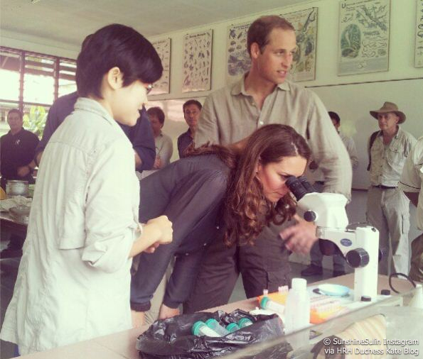 kate looks through a microscope in the rainforest