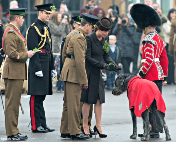 Duchess of Cambridge pins shamrocks on Domhnall, the Irish Wolfhound at the St Patrick's Day parade at Mons Barracks, Aldershot