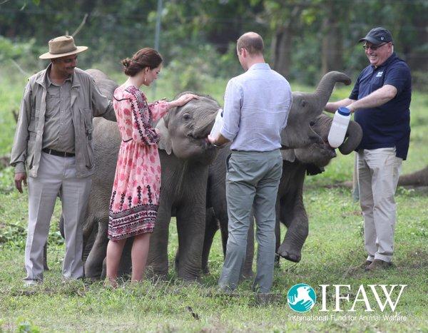 feeding-baby-elephants